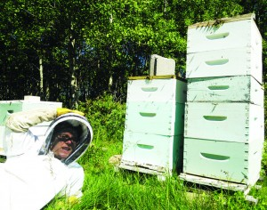 Meg Braem poses with her hives | Photo courtesy of Will Pratt